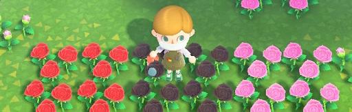 交配 バラ あつ 森