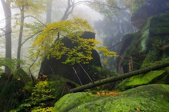 Photo: Amazing location with mysterious atmosphere.  #landscapephotography curated by +Margaret Tompkins, +Ke Zeng, +David Heath Williamsand +paul t beard +10000 PHOTOGRAPHERS around the World #1000photographersaroundtheworld by +Robert SKREINERand +Walter Soestbergen #photoplusextract by +Jarek Klimek  +HQSP Landscape  #hqsplandscape   #germany  #saxony  #saxonswitzerland  #autumn