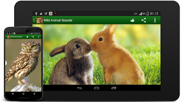 Screenshot of Wildlife Sounds