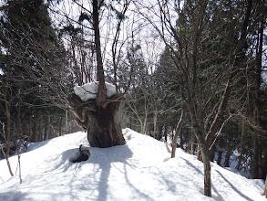 所々で大木