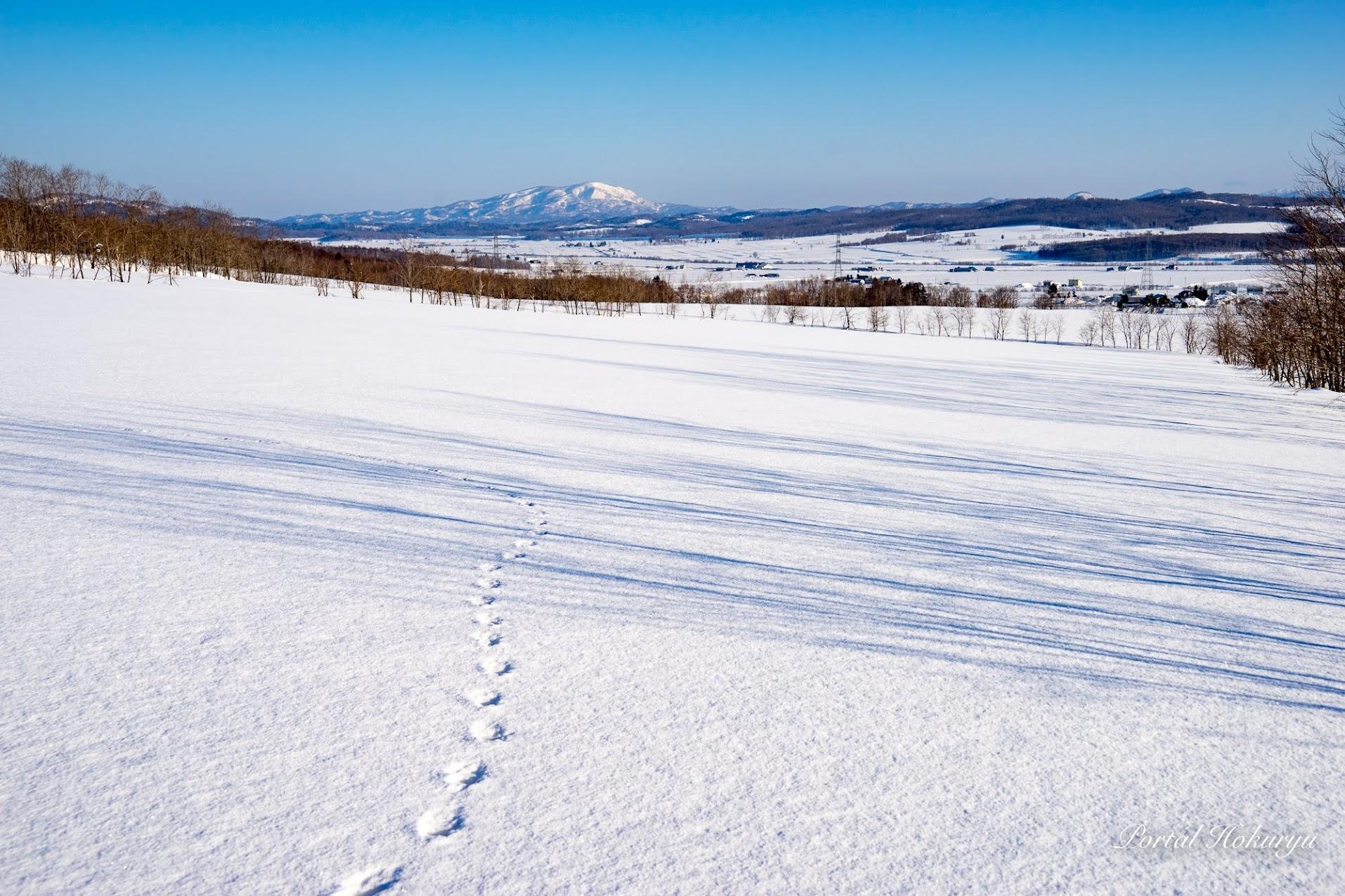 雪上のシルエット模様