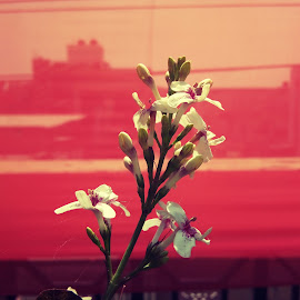 by Mukesh Vaishnav - Flowers Flower Buds