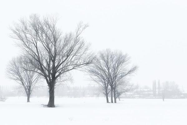 Generale Inverno di Fotodiale