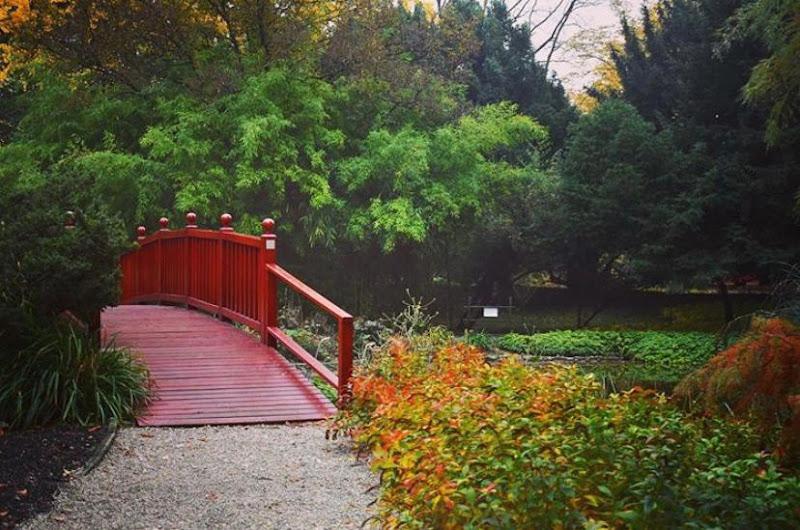 Botanical Garden in Zagreb di Cecilia Settimi
