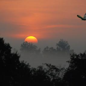 Flight at Sunrise by Michael Smith - Landscapes Sunsets & Sunrises ( bird, trees, sunrise, morning, landscape,  )