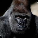 Gorilla Live Wallpaper icon