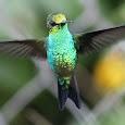 Aves del Eje Cafetero y Región Andina