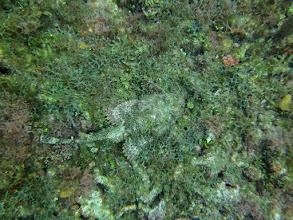 Photo: Scorpionfish