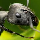 Ant のファームの壁紙 icon