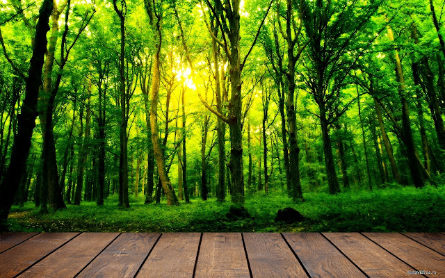 Access to Forest chrome extension