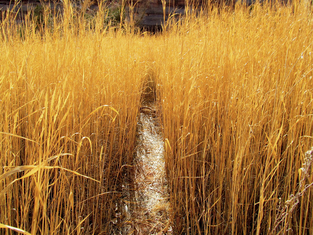 Trail through tall grasses