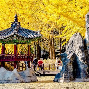 nami island south korea by Charles Saswinanto - City,  Street & Park  Amusement Parks