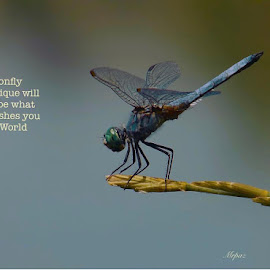 Dragonfly by Daniel Paz - Nature Up Close Other Natural Objects
