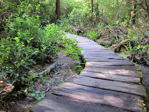 Photo: Cool boardwalks along the hike. Seemed like Ewoks from Return of the Jedi would jump out at anytime.