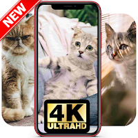 2020 Cute Cat Wallpapers Hd Cool Cat Pictures Android Iphone App Not Working Wont Load Black Screen Problems