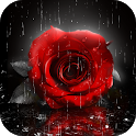 Red Rose Live Wallpapers Themes icon