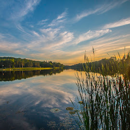 Cattail Sunset by Jeff Lebovitz - Landscapes Sunsets & Sunrises ( clouds, blue, cattails, sunset, reflections, adams lake )