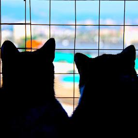 ali & gara by Almasa Dalan - Animals - Cats Portraits
