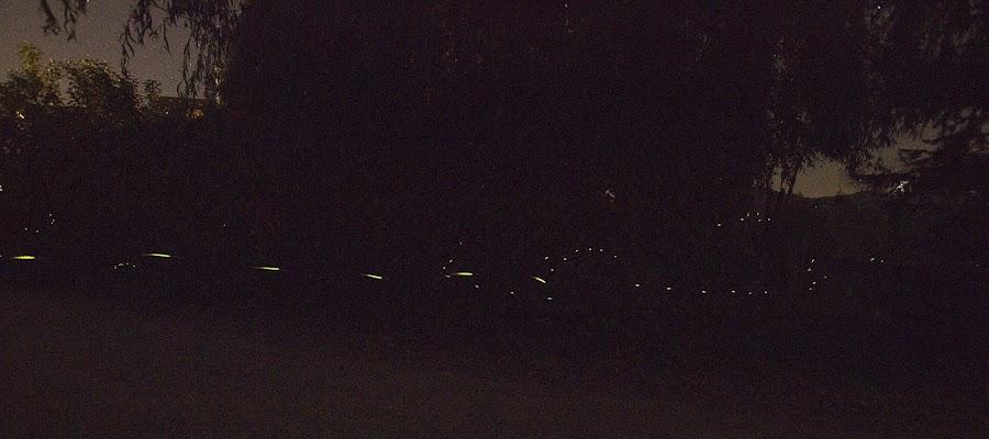 lucciole di Sebastiano Pieri