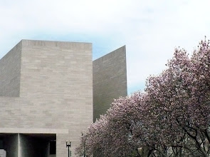 Photo: Magnolia trees on the plaza in front of the older, West Building of the National Gallery of Art, Washington, DC. Ahead is the East Building.
