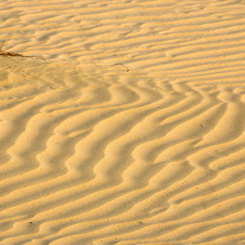 Dubai Sands by Ingrid Anderson-Riley - Nature Up Close Sand