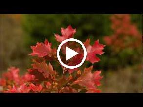 Video: A. Vivaldi  Alceste (RV Anh. 77) - Aria [soprano]  Hai sete di sangue - Alceste (RV Anh. 77) -