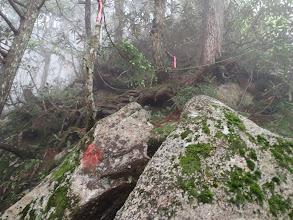 岩の上に上り尾根沿いに