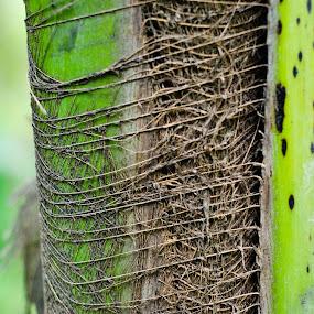Texture by Nilkamal Laskar - Nature Up Close Trees & Bushes