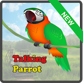 Talking and Dancing Parrot