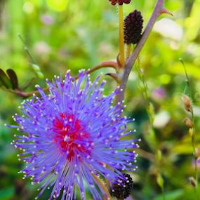 by Abhishekh Vijayakumar - Flowers Flower Gardens
