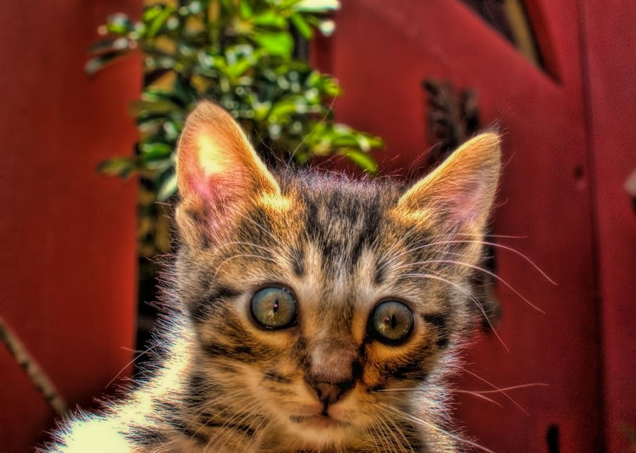 kitten, mexico by Jim Knoch - Animals - Cats Kittens