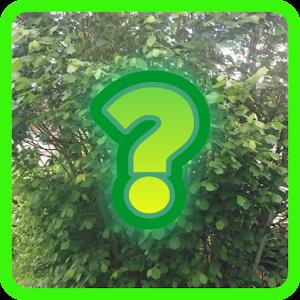essbare Pflanze mit botanischem Namen