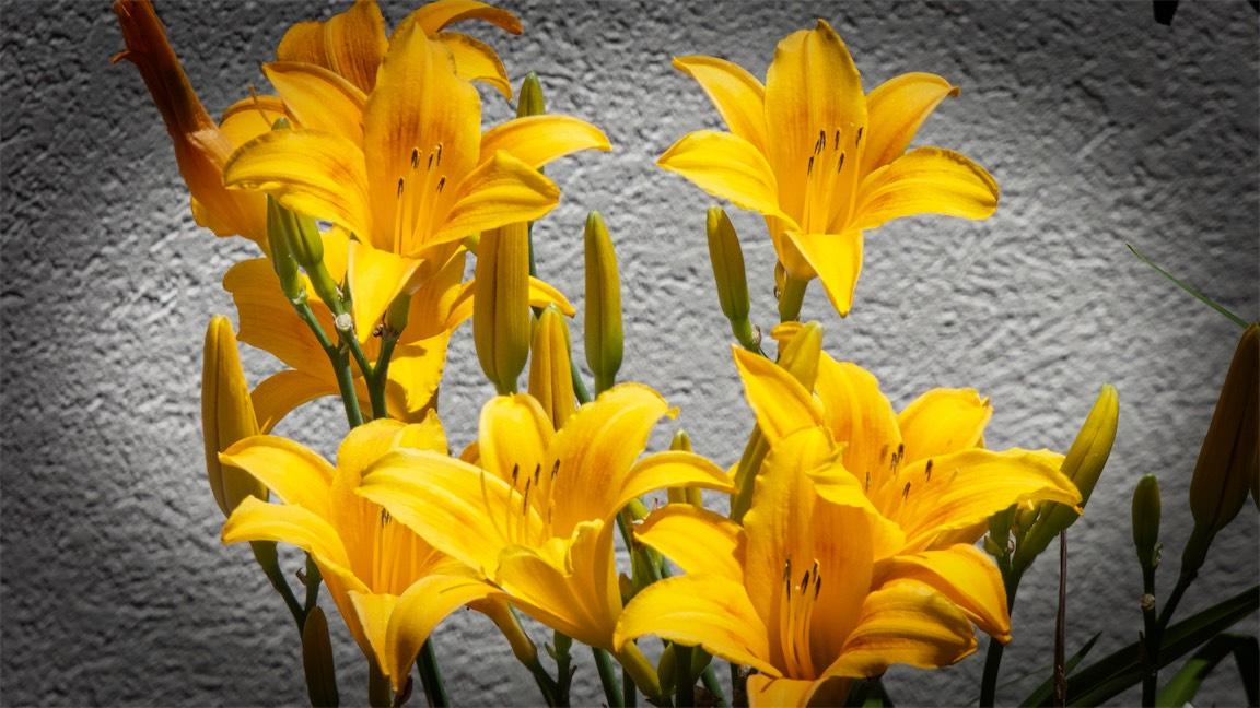 B-Daylilies.jpg