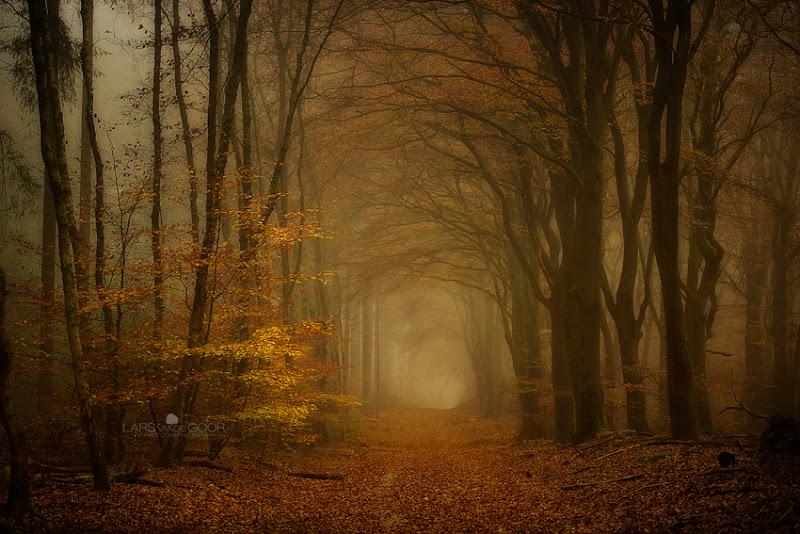 Photo: Wood B