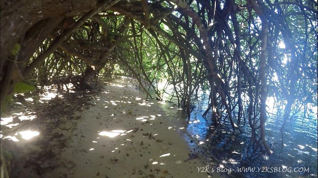 Il tunnel di mangrovie - Huahine