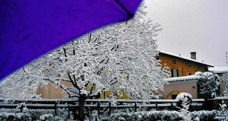 L'abito invernale del paesaggio di Cary
