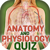 Human Body Anatomy Quiz