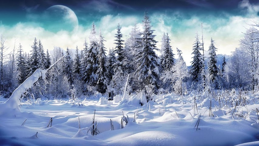 android Winter forest.Nature wallpaper Screenshot 5