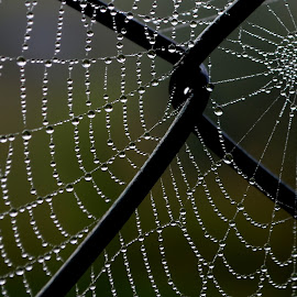 by Roseann Jech - Nature Up Close Webs