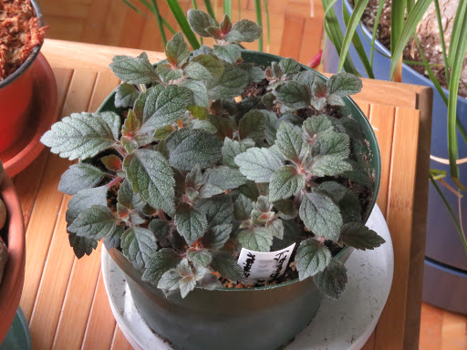 Autres plantes chez Grigri TNxYGX1wWDYjgCJ9AQzJaYPpdHrMUViAU4_cE27LRBLP5H2mKC4wyesS37VLpf_VEeUDyGQNK89LIL9p0EAn1glTYCCXDI7G9N4N94679sMGO9u_oVwwtciISxeqINfNl_HlxAQ