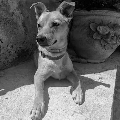 Il cane di Ais