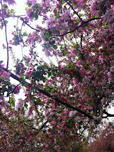 Photo: Blossoms