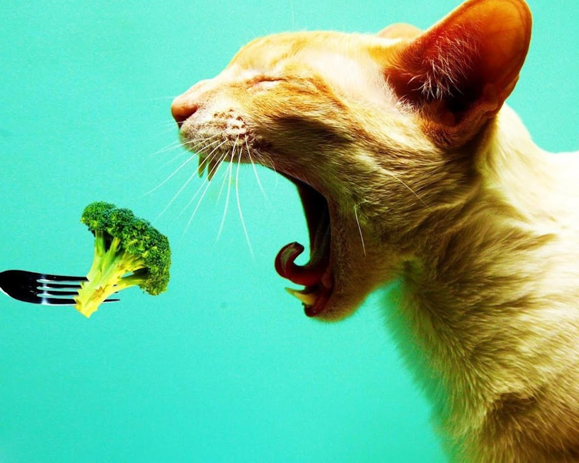 funny cats wallpaper - android apps on google play