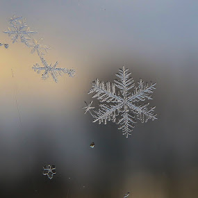 Just a Few Flakes by Bob Minnie - Nature Up Close Natural Waterdrops ( macro, snow, winter, flake, water,  )