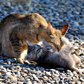 Playing with mummy... by Lorraine Bettex - Animals - Cats Playing (  )