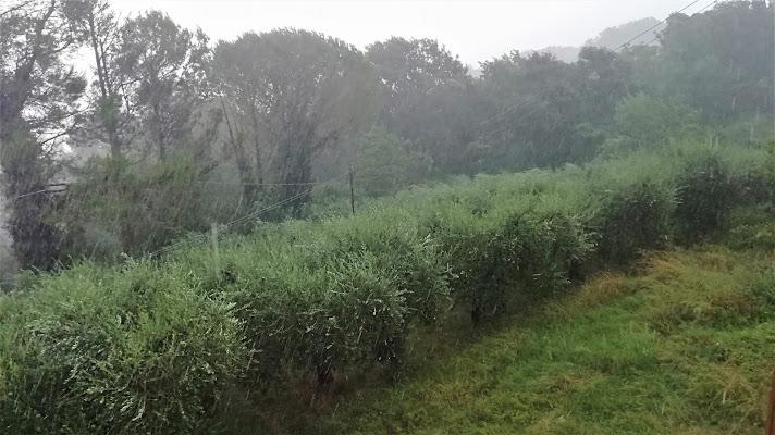Pioggia e ulivi.... di Nikaele