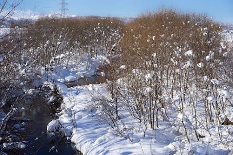 枯木に宿るスノーボール