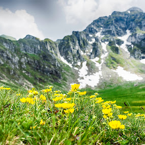 Cloudy summer day by Emil Zaman - Landscapes Mountains & Hills ( cloudy, mountains, snow, yellow, clouds, summer )