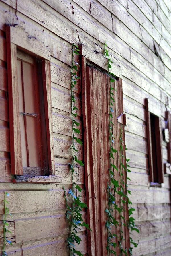 The Unused Door by Rhonda Mullen - Buildings & Architecture Other Exteriors