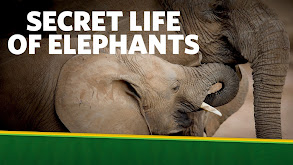 The Secret Life of Elephants thumbnail